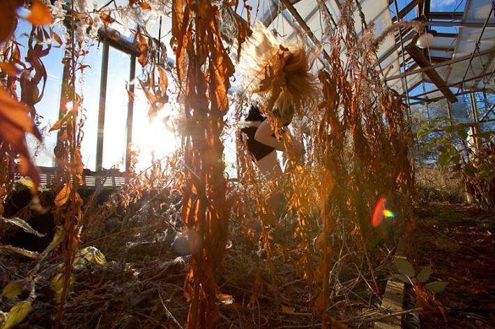 """Anni Kinnunen, """"Darwin's Garden"""""""