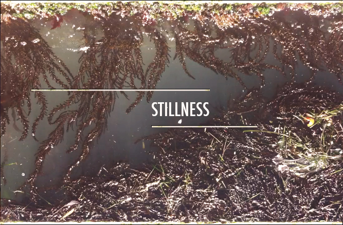 "John Woodward: ""Stillness"""