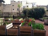 Community Garden, Florence