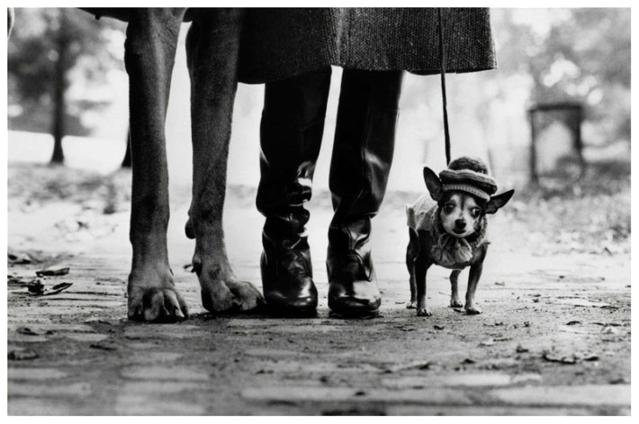 "Elliott Erwitt, ""Felix, Gladys and Rover"" - New York, 1974"