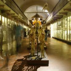 """SACI's Body Archives 2 Exhibition, Museum of Natural History """"La Specola"""" in Florence"""