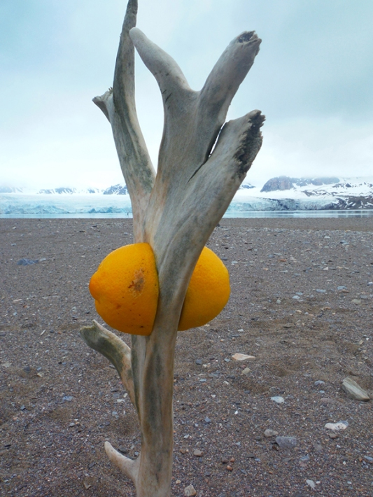 "Keri Rosebraugh, ""Can Reindeer Get Scurvy I,"" Sculpture, 2015, Fjortende Julibukta Spitsbergen, Norway"