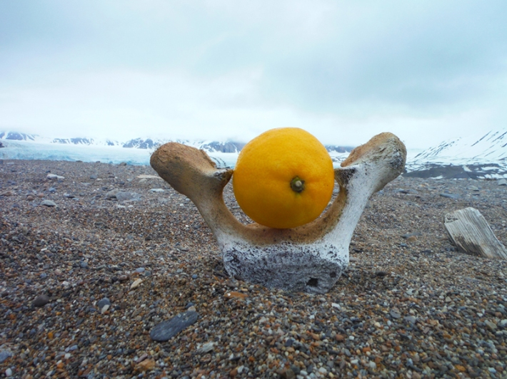 "Keri Rosebraugh, ""Can Reindeer Get Scurvy II,"" Sculpture, 2015, Fjortende Julibukta Spitsbergen, Norway"