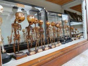 University of Florence Anatomical Museum