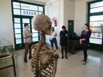 SACI students visiting the University of Florence Anatomical Museum