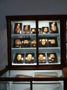 """The museum's collections are divided into four sections: the osteological collection, the anatomical organic preparations, the waxworks section and the anatomical instrumentarium section. The objects in the osteological collection, dating from the late 19th and early 20th centuries, are displayed in fourteen showcases and described in a handwritten catalogue. In addition, there are fully assembled skeletons dating from the end of the 18th century. The collection of anatomical specimens, enlarged over the course of time, comes from the Physiological Museum of the Royal Institute of Higher Studies. Of special interest is the series of specimens prepared by Filippo Pacini, Paolo Mascagni and Luigi Paganucci. One section is dedicated to the """"petrified"""" objects of Girolamo Segato. The waxworks collection contains anatomical wax figures and plaster casts. Noteworthy is the original wax model of the corpuscles sensitive to touch, called """"tactile ganglions"""", commissioned by their discoverer Filippo Pacini in 1863 of Remigio Rei, the wax modeller of the Specola school. In the anatomical instruments section are drawers containing instruments used for surgery and dissection. Some of the objects in the Museum are still used today in the Department's teaching activity."""