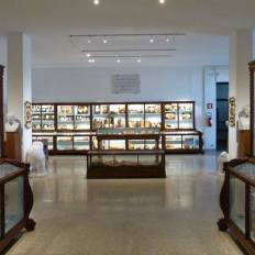 University of Florence Anatomical Museum