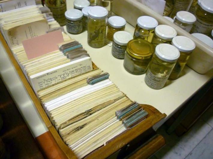 SACI's Body Archive class field trip to La Specola